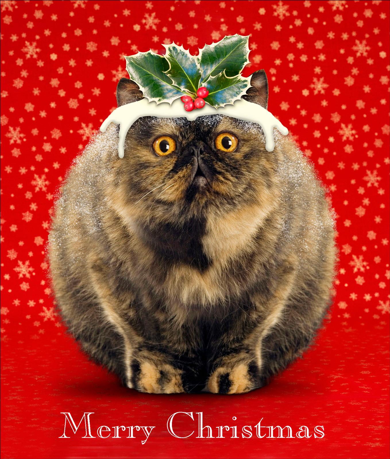 Cat's Pudding Funny Cat Christmas Greeting Card