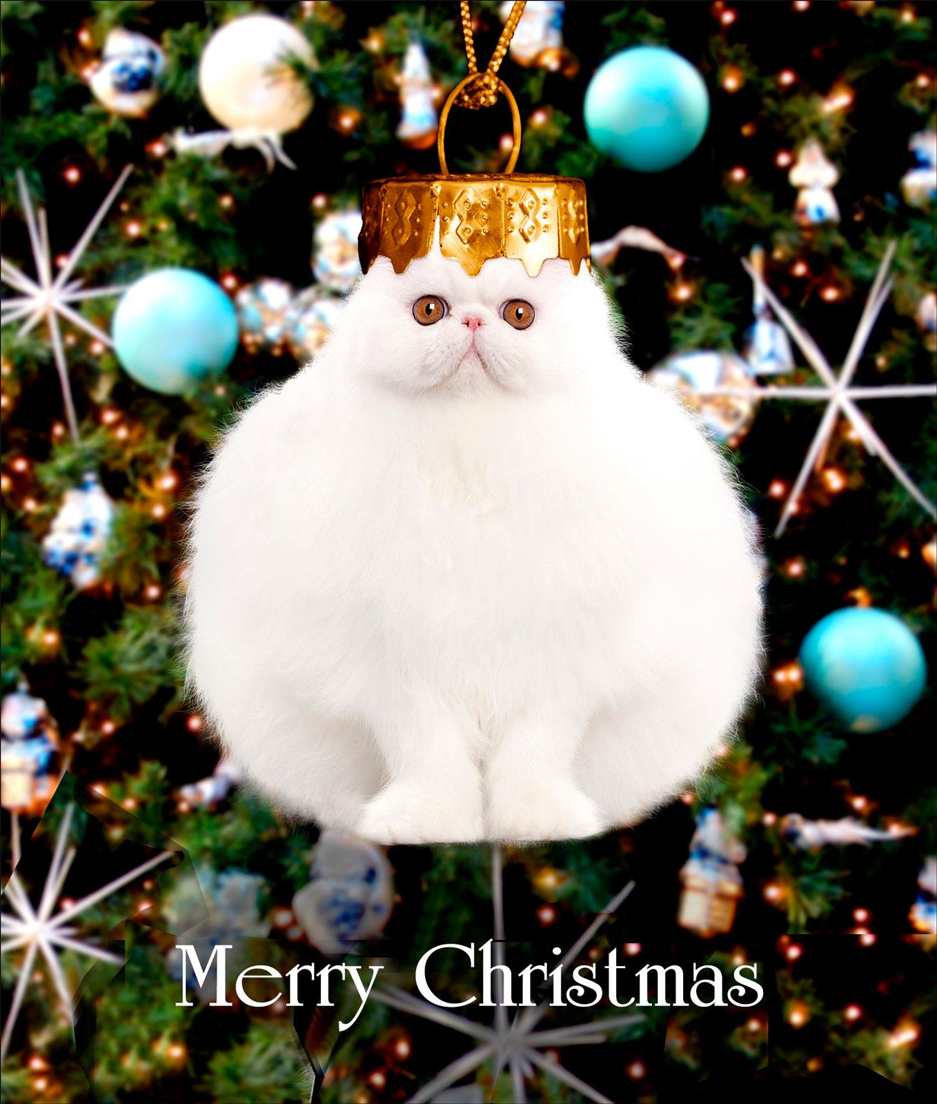 Cat Bauble Christmas Greeting Card