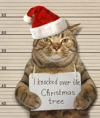 Moggie Mugshot Funny Cat Christmas Greeting Card