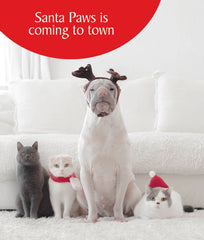 Santa Paws is Coming Funny Cat Christmas Greeting Card
