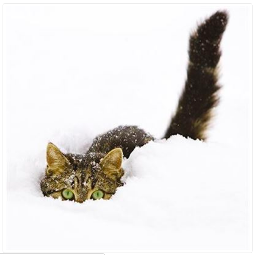 Hiding in the Snow Cat Greeting Christmas Card