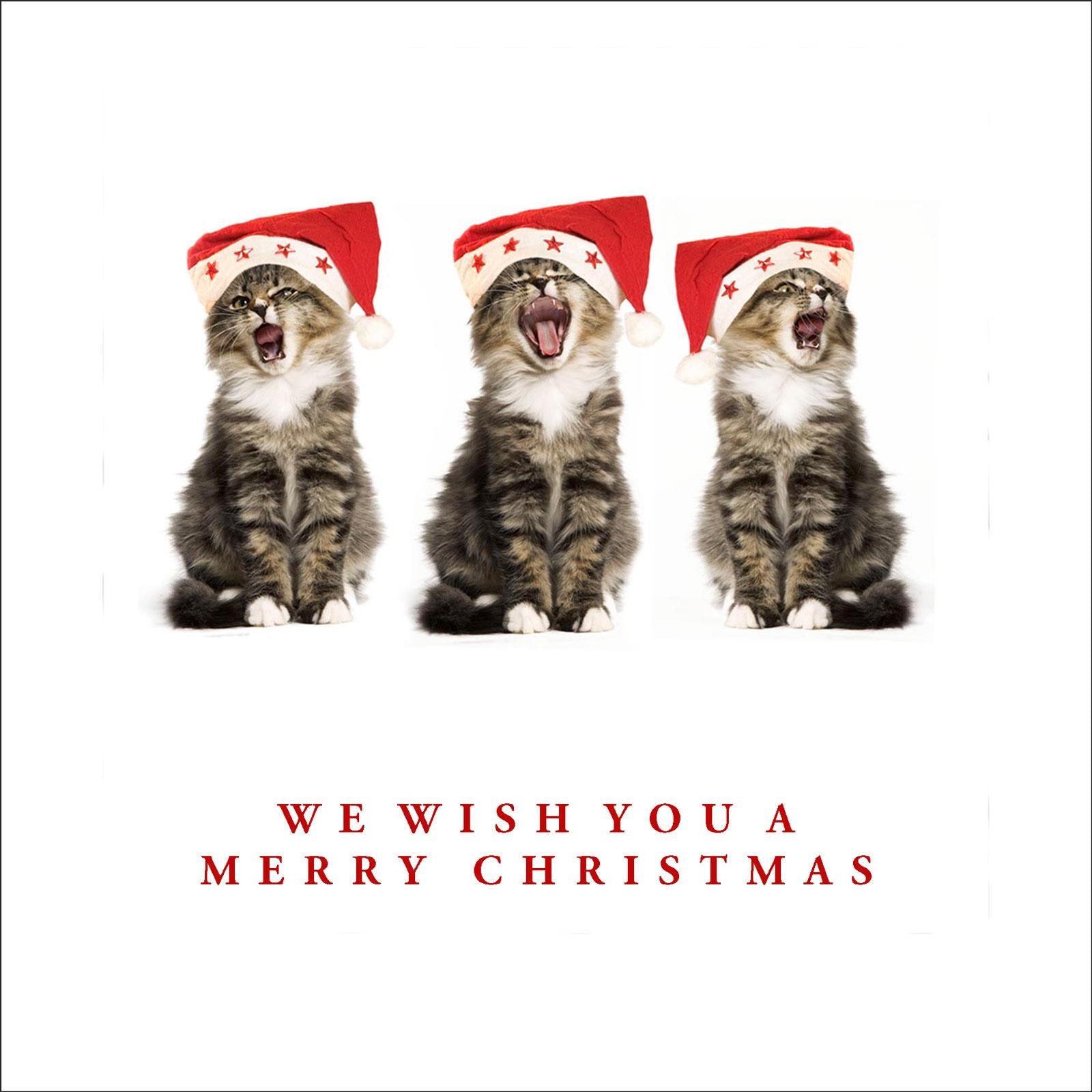 Kitty Chorus Funny Cat Christmas Greeting Card