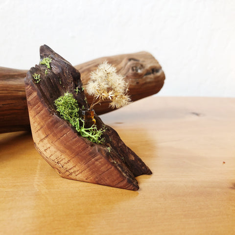 Tiny Plant + Manzanita Home Decor
