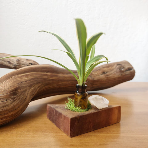 Mini Plant Wood Home Decor