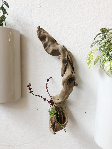 Driftwood Vial Wall Decor
