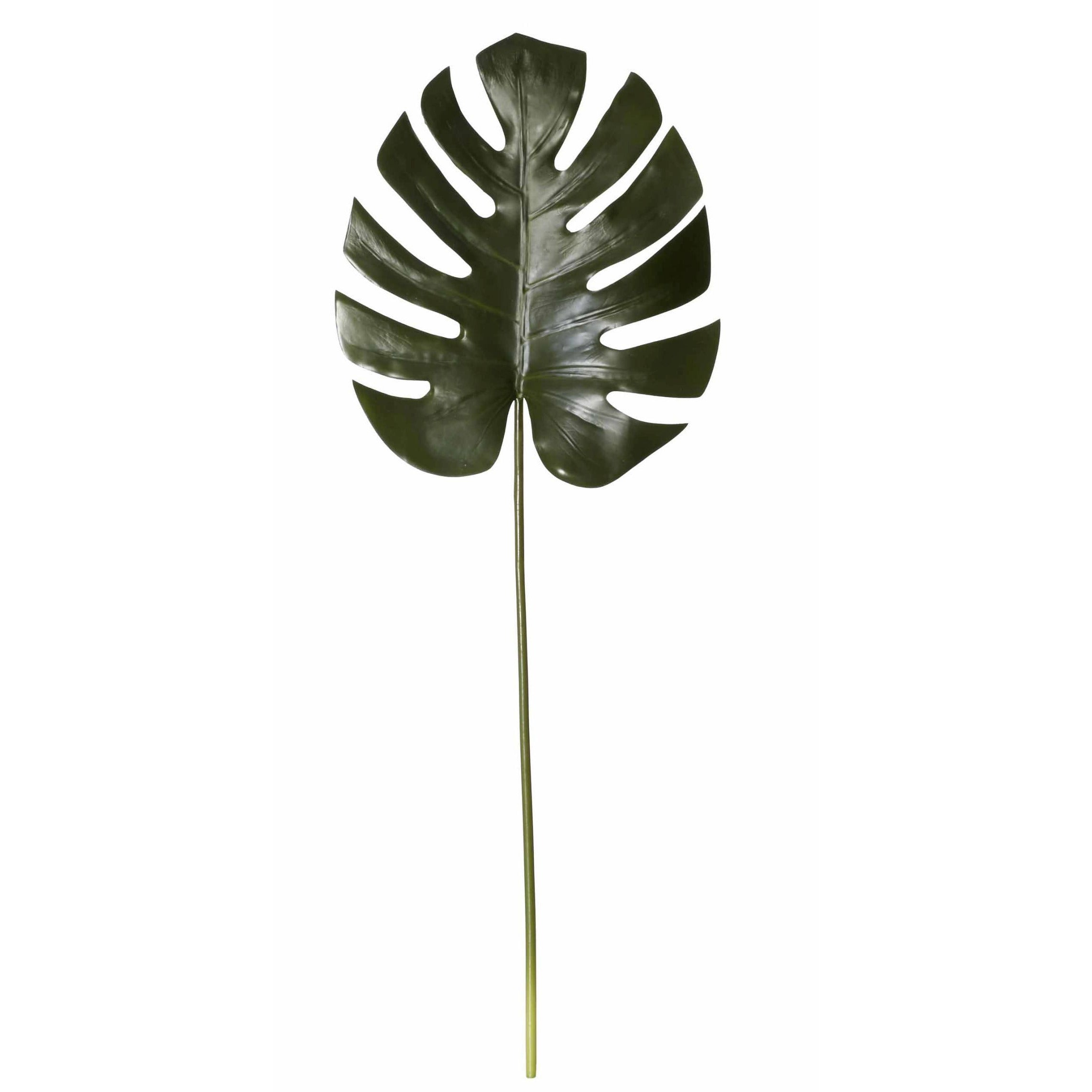 Plant Monsteria Rogue Leaf