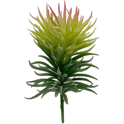 Plant Light Green Spiky Succulent