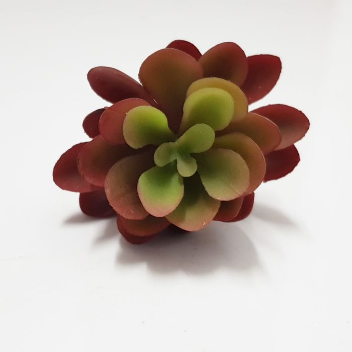 Plant Mini Purple Flower Succulent