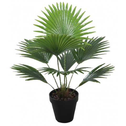 Plant Fan Palm 45cm