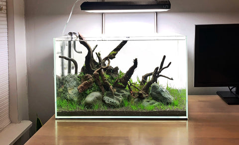 Creating a Classic Nature Aquarium Scape