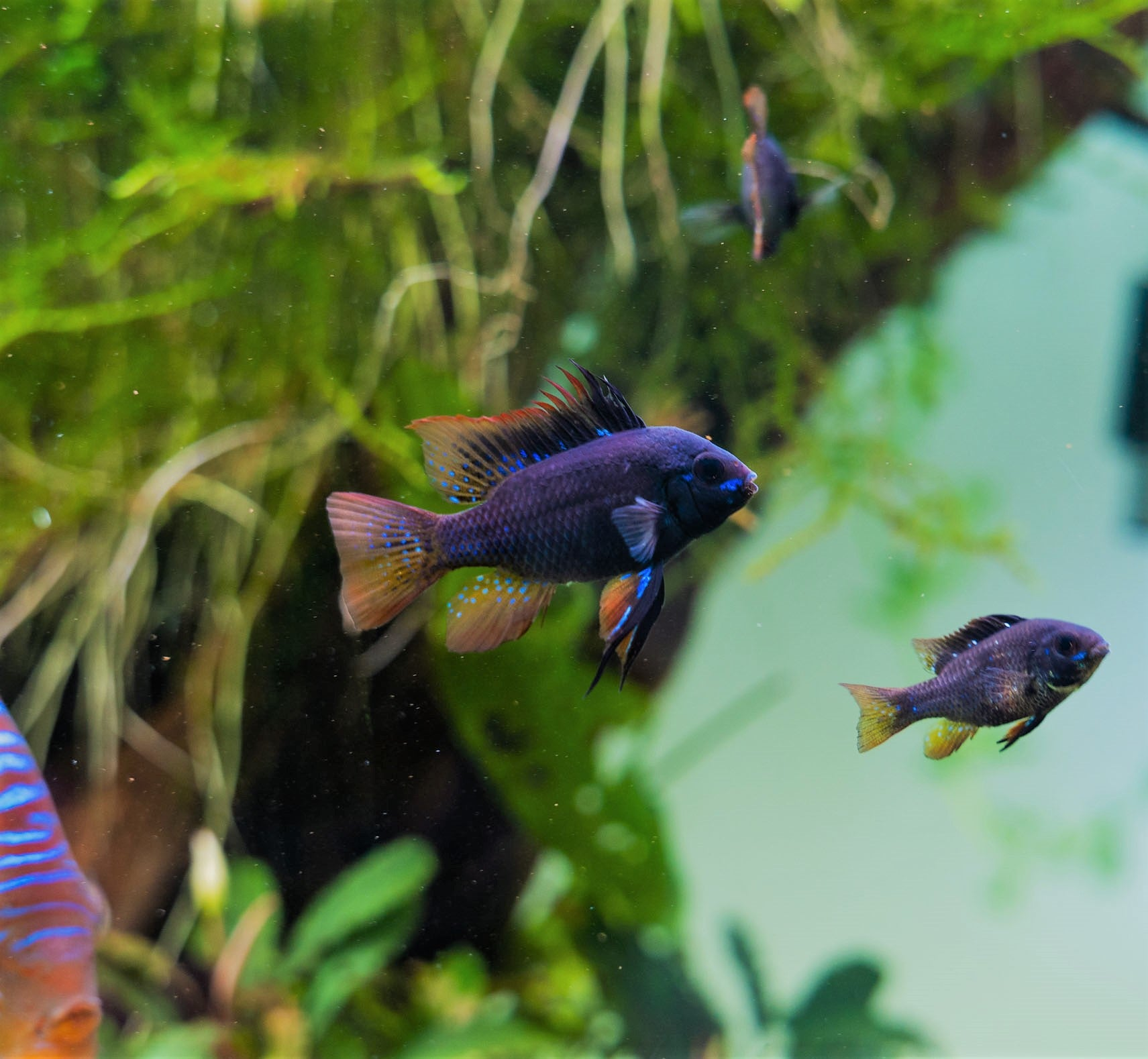 Tips for Beginners in the Aquarium Hobby