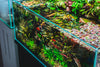 How to Cycle a Planted Aquarium