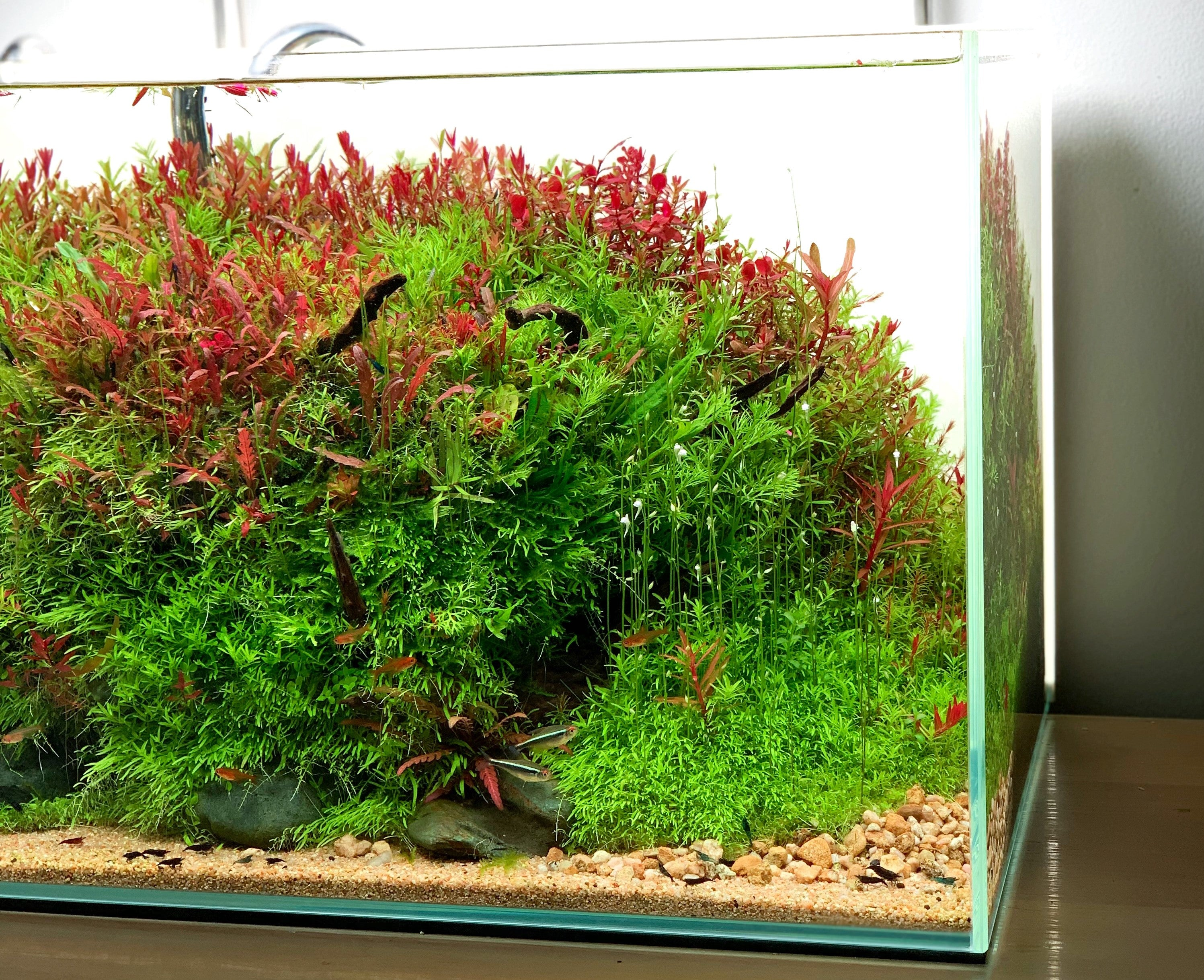 7 Tips to Make Your Aquascape Look Professional