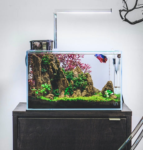 Keeping Bettas: Why You Need a Planted Tank
