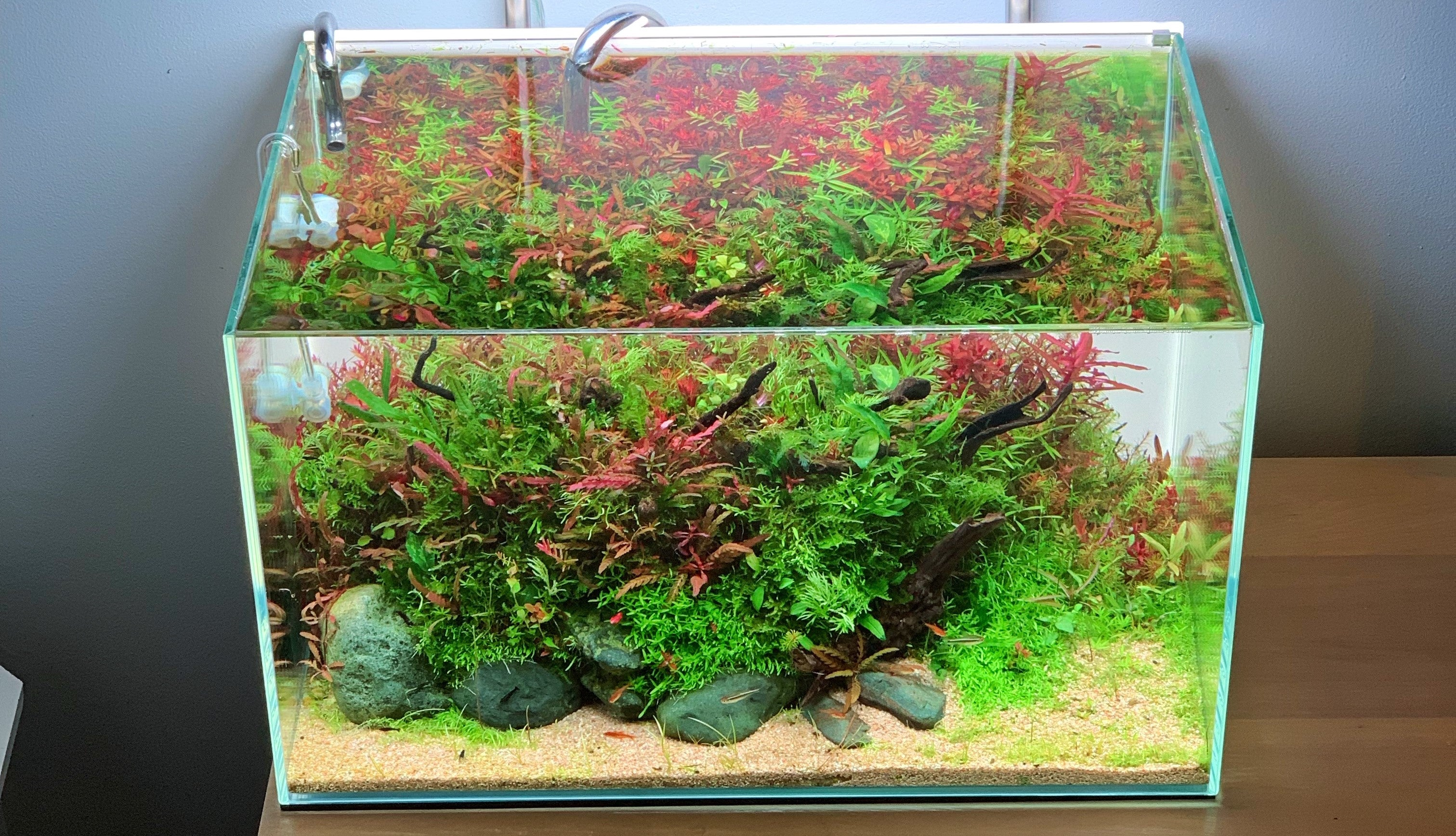 Top 5 Aquascaping Styles