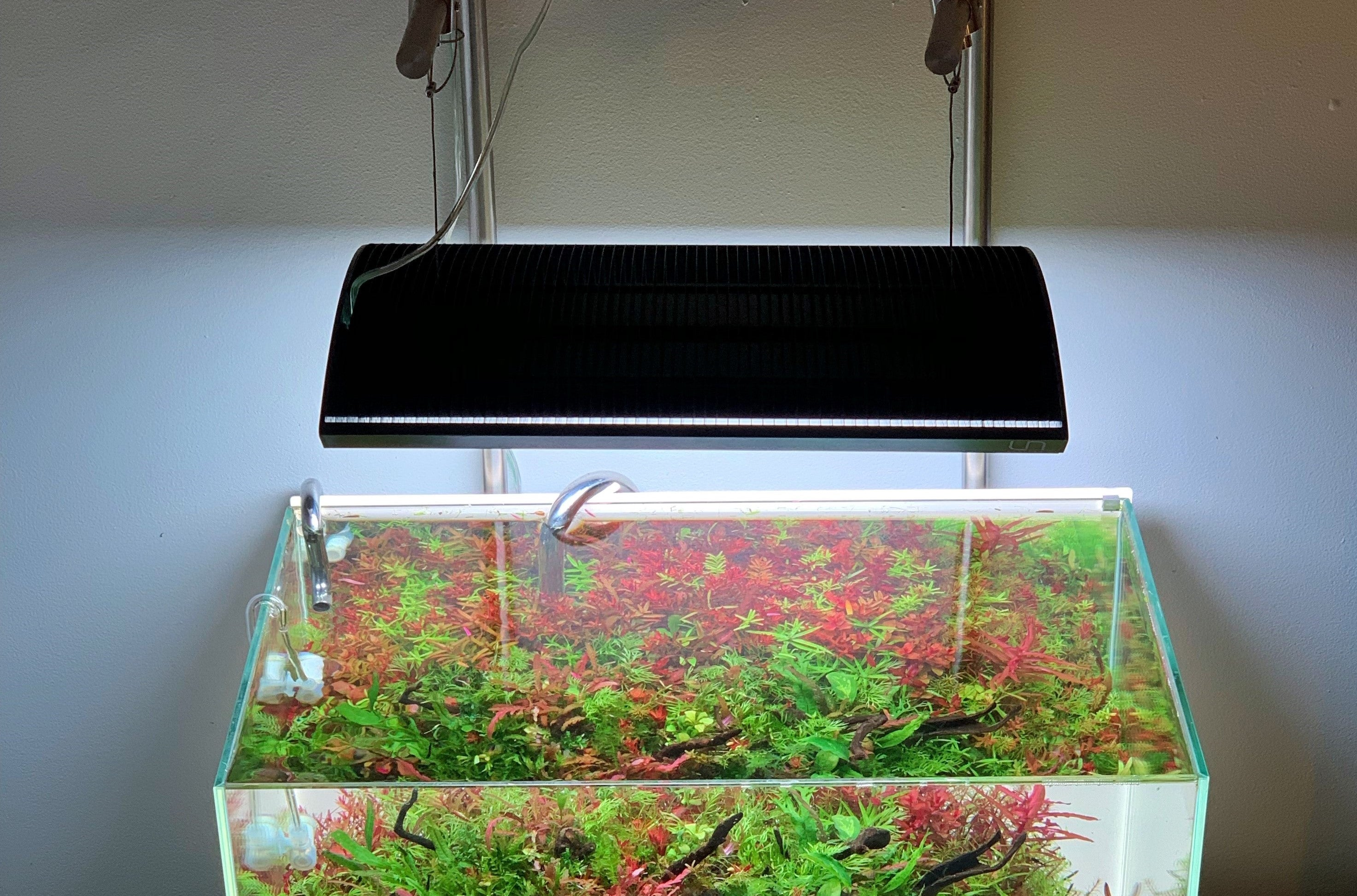 Lighting Requirements for a Planted Aquarium