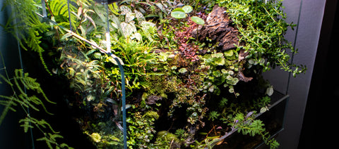 Top 7 Best Terrarium Plants