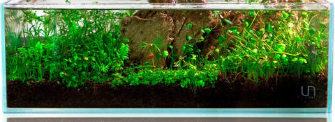 Planted Aquarium Substrate: Soil, Gravel, and Sand