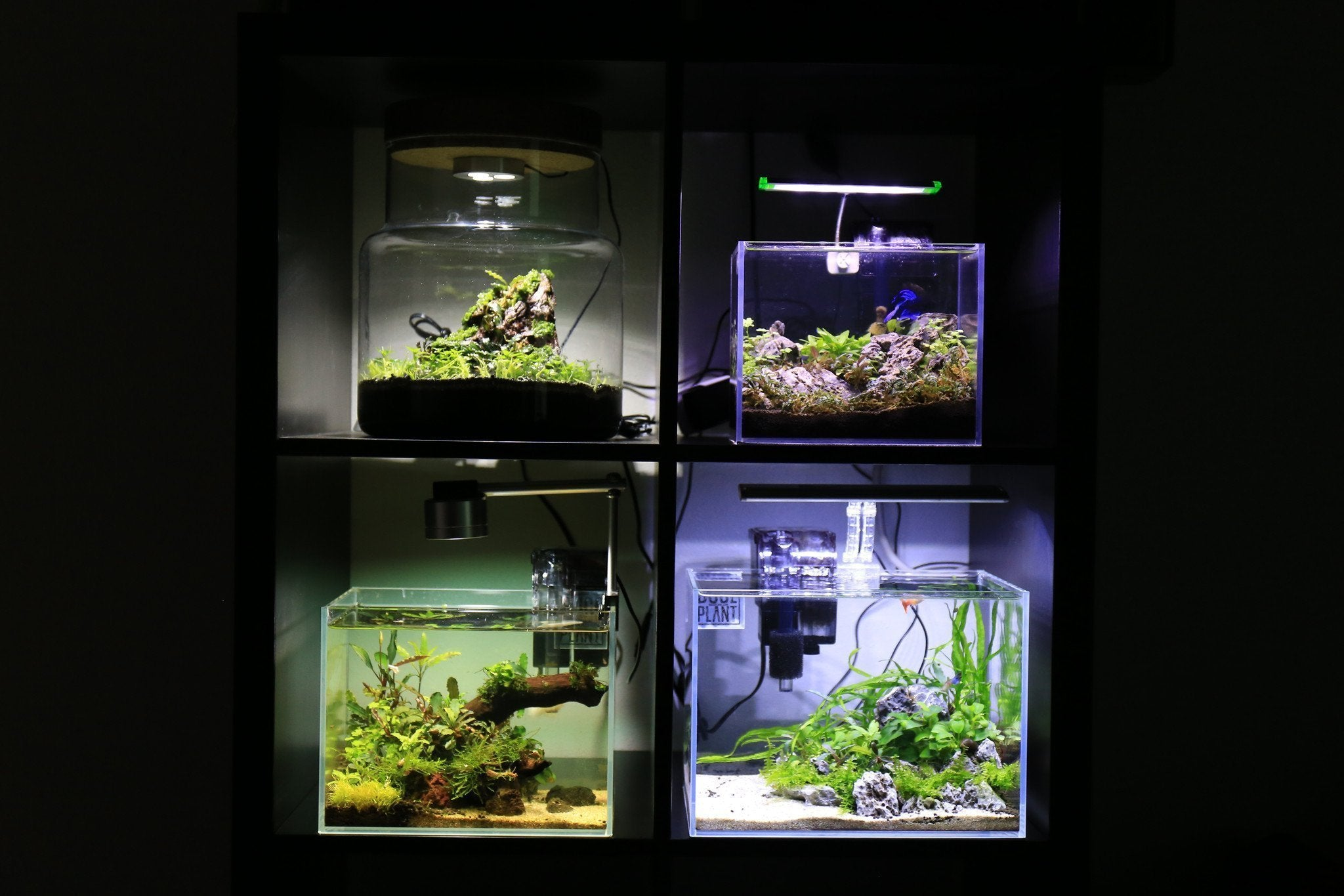 How to Build Low-Tech Planted Tanks Guide