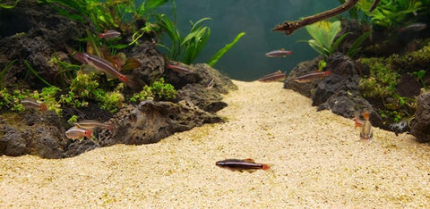 Tips for Maintaining an Aquascape with Multiple Substrates