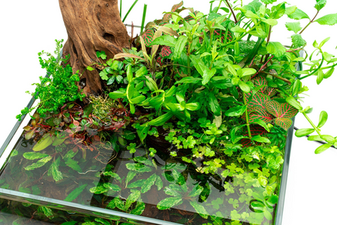 How to Create a Self-Sustaining Aquarium