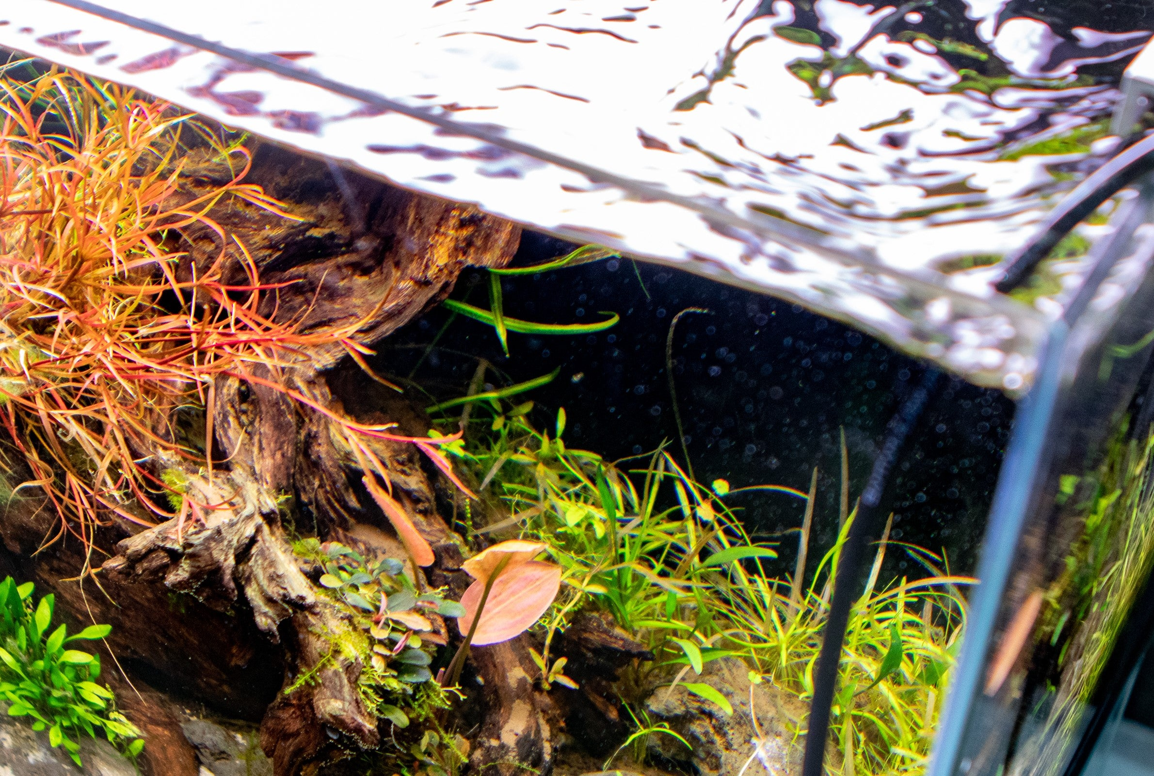 The Importance of Water Changes in the Planted Tank