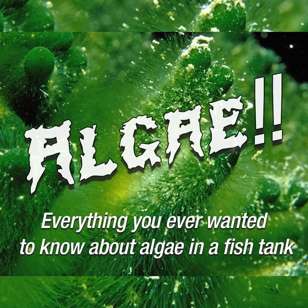 Everything You Ever Wanted to Know About Algae in a Fishtank