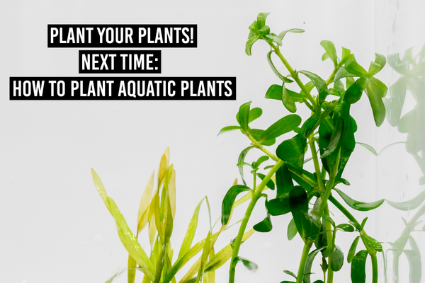 Next time: how to plant your plants
