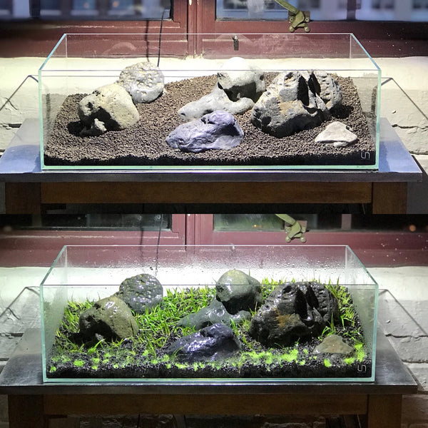 Ultum Nature Systems Shallow Planted Aquarium