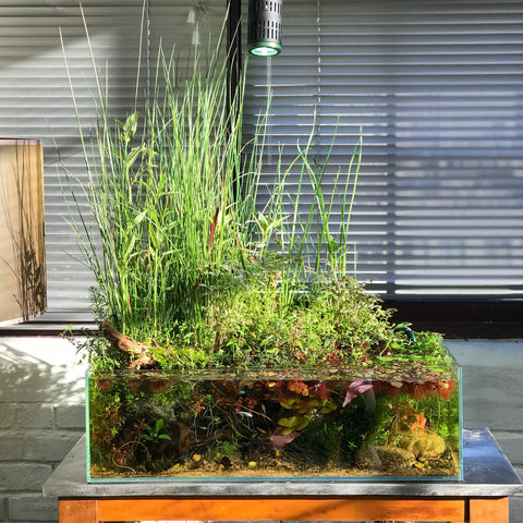 planted tank with emersed and submerged plants