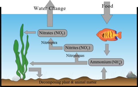 nitrogen cycle for fish tank