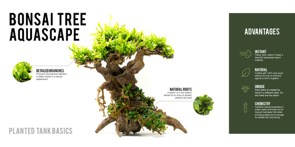 Bonsai Tree Aquascape