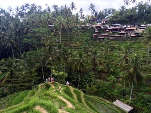 View of Bali Rice paddies from hilltop
