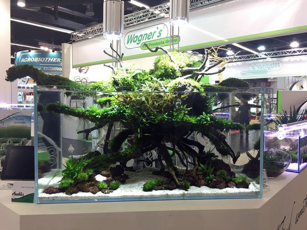 Aquascaped aquarium with wood and emersed aquatic plants