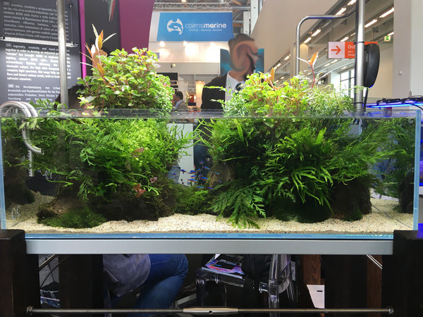 Emersed style aquarium on display