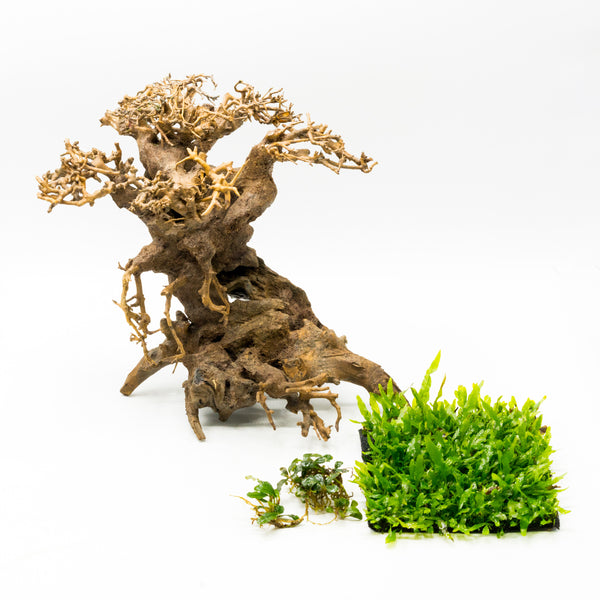 Bonsai Driftwood Tree