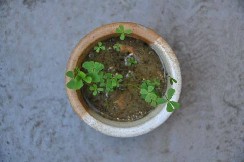 aquarium plant mini diy pond