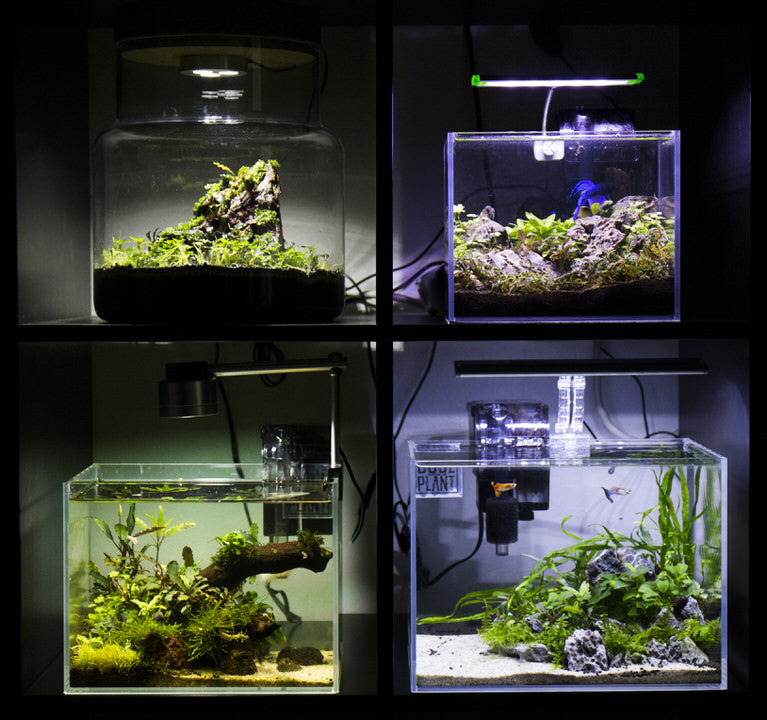 Nano Grid Display of aquascapes with rimless tanks