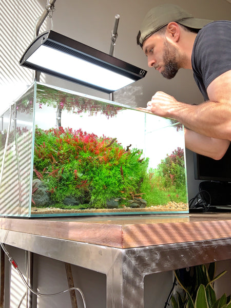 Aquascape with Ultum Nature Systems rimless tank and lighting