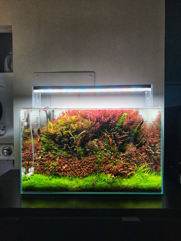dutch style aquarium with red and green plants