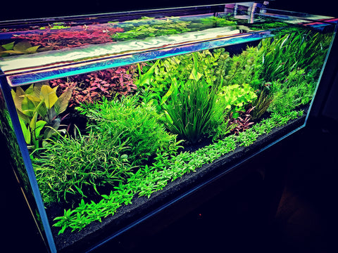 dutch aquascaping style