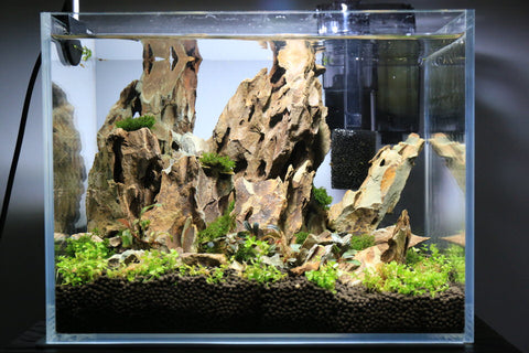 aquarium with large stones and few small aquatic plants