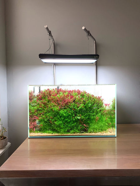 Ultum Nature Systems Planted Aquarium with red and green plants