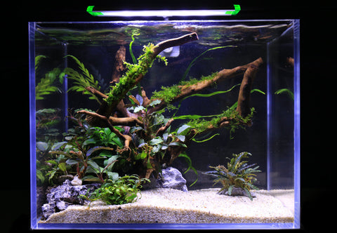 large aquarium with wood and aquatic plants under lighting