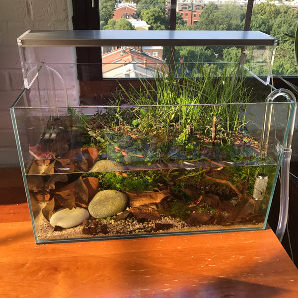 A Quick Guide To Setting Up A Pond Tank Buce Plant