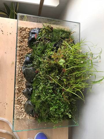 top view of emersed style tank with rocks accenting green aquatic plants
