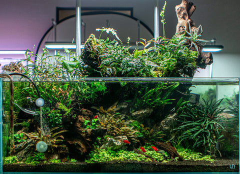 cycled aquarium fish tank