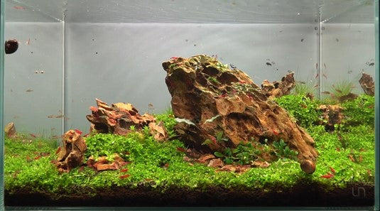 dragon stone aquascape