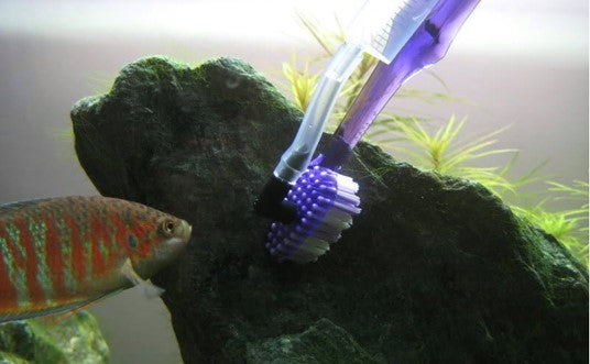 cleaning algae with a toothbrush