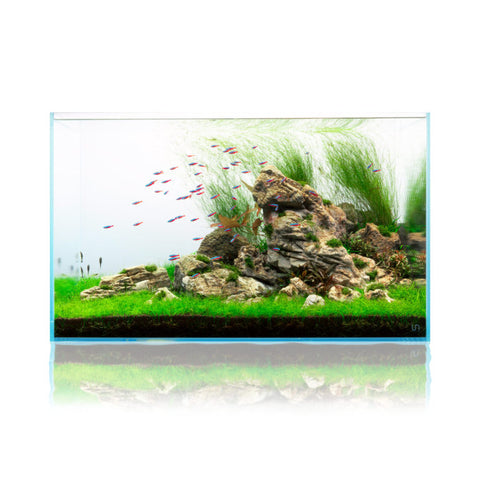 Top 5 Aquascaping Styles Buce Plant
